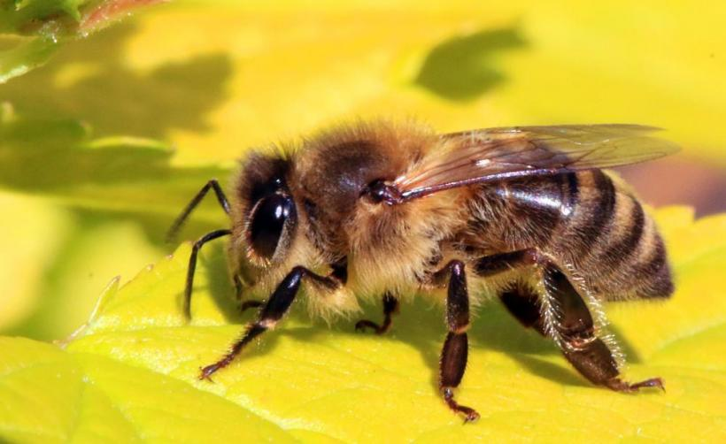 Air pollution making honey bees sick